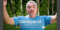 CESAR MILLAN LIVE